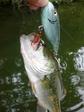 20080615-7.JPG